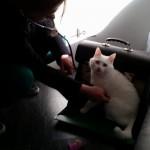 Gezondheidscontrole dierenarts aan huis