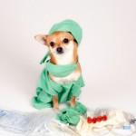 Hondje in operatiekleding